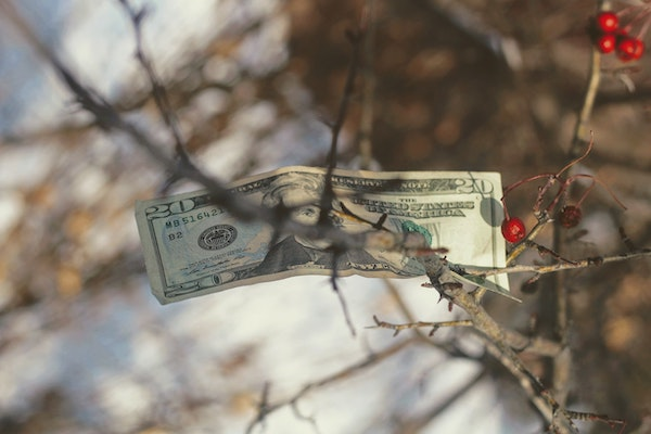 #47 Au comptoir! – L'argent pousse dans les plants –